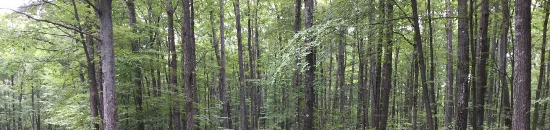 Tracy Ridge Recreation Area: Campsite 106 (not in use)