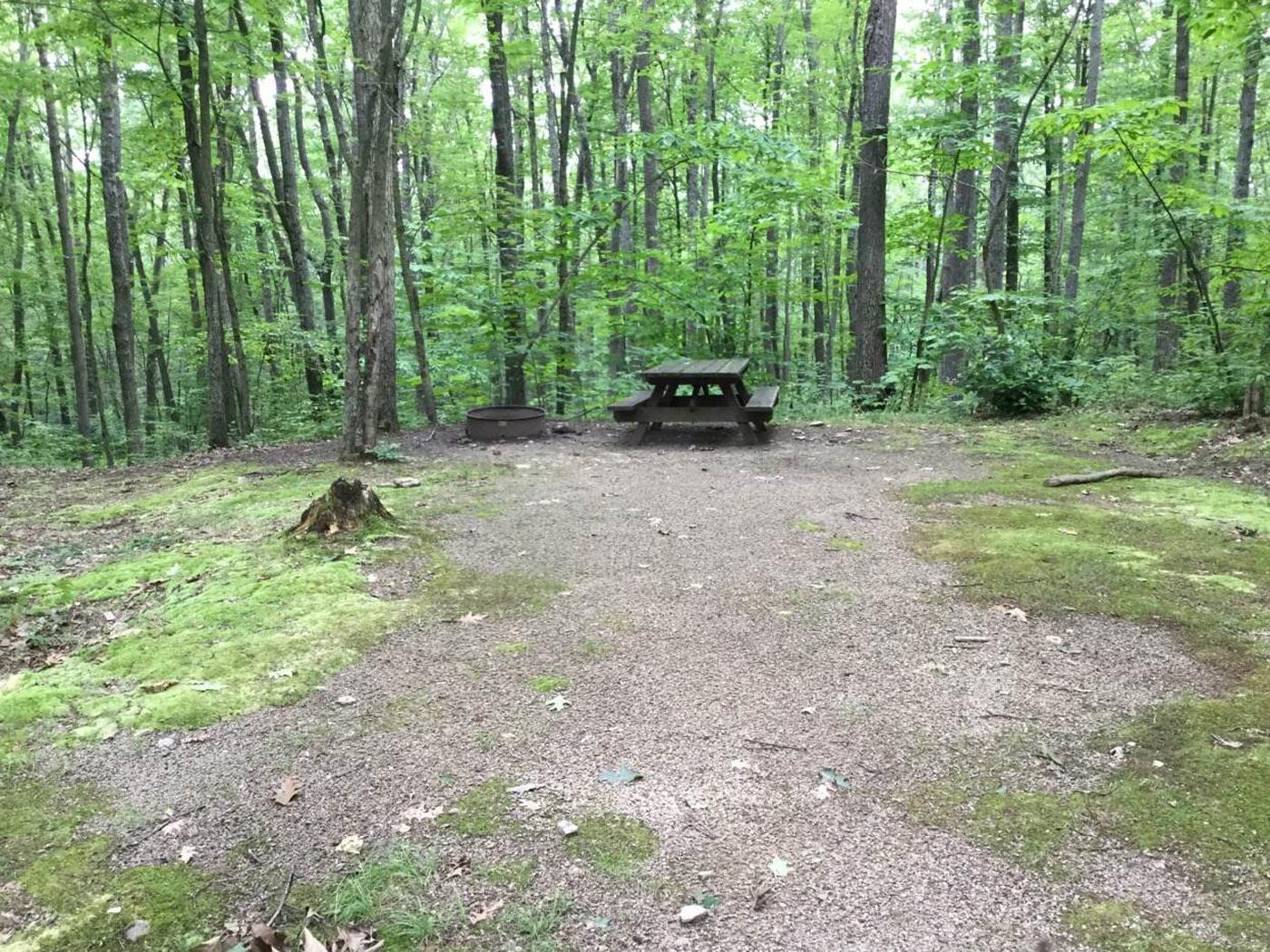 Tracy Ridge Recreation Area: Campsite 107