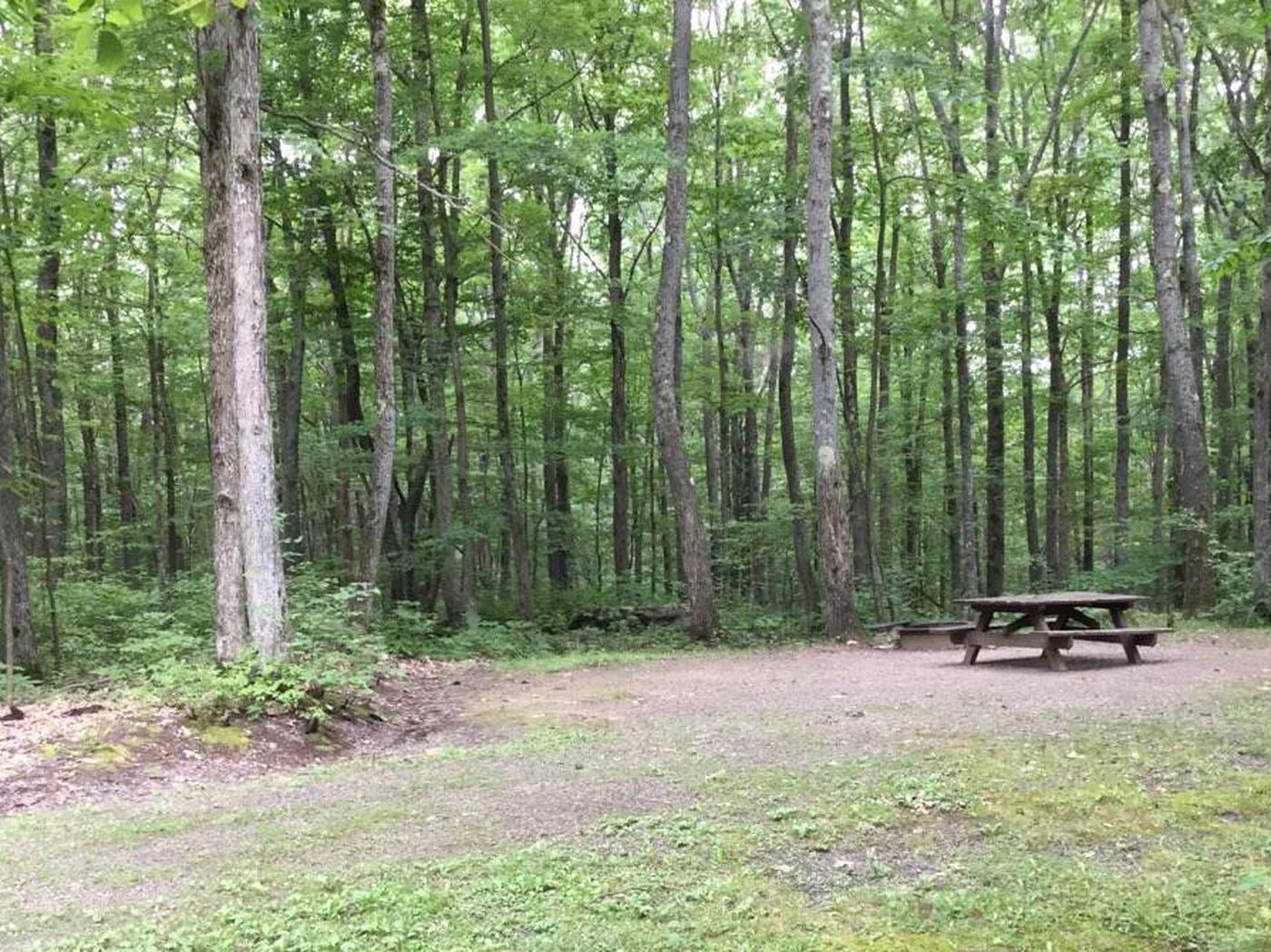 Tracy Ridge Recreation Area: Campsite 110