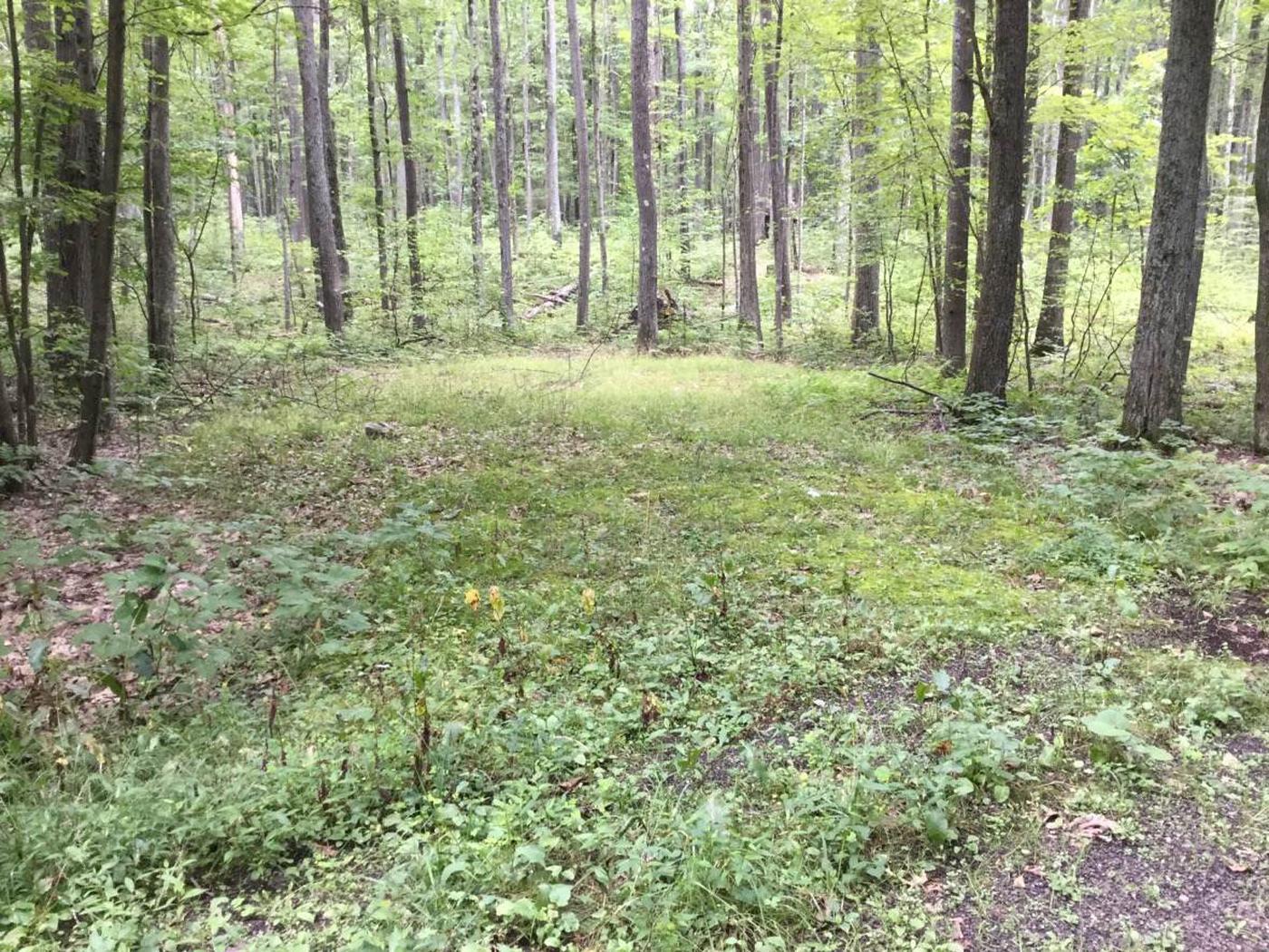 Tracy Ridge Recreation Area: Campsite 111 (not in use)