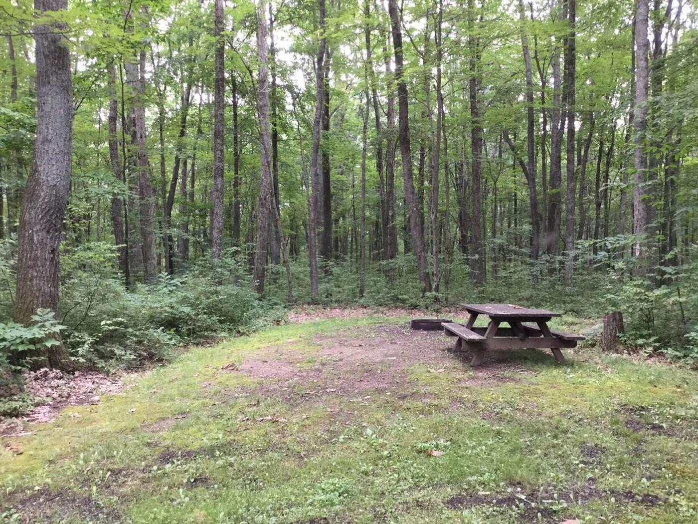 Tracy Ridge Recreation Area: Campsite 113