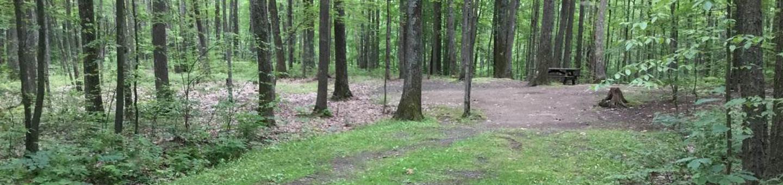 Tracy Ridge Recreation Area: Campsite 116