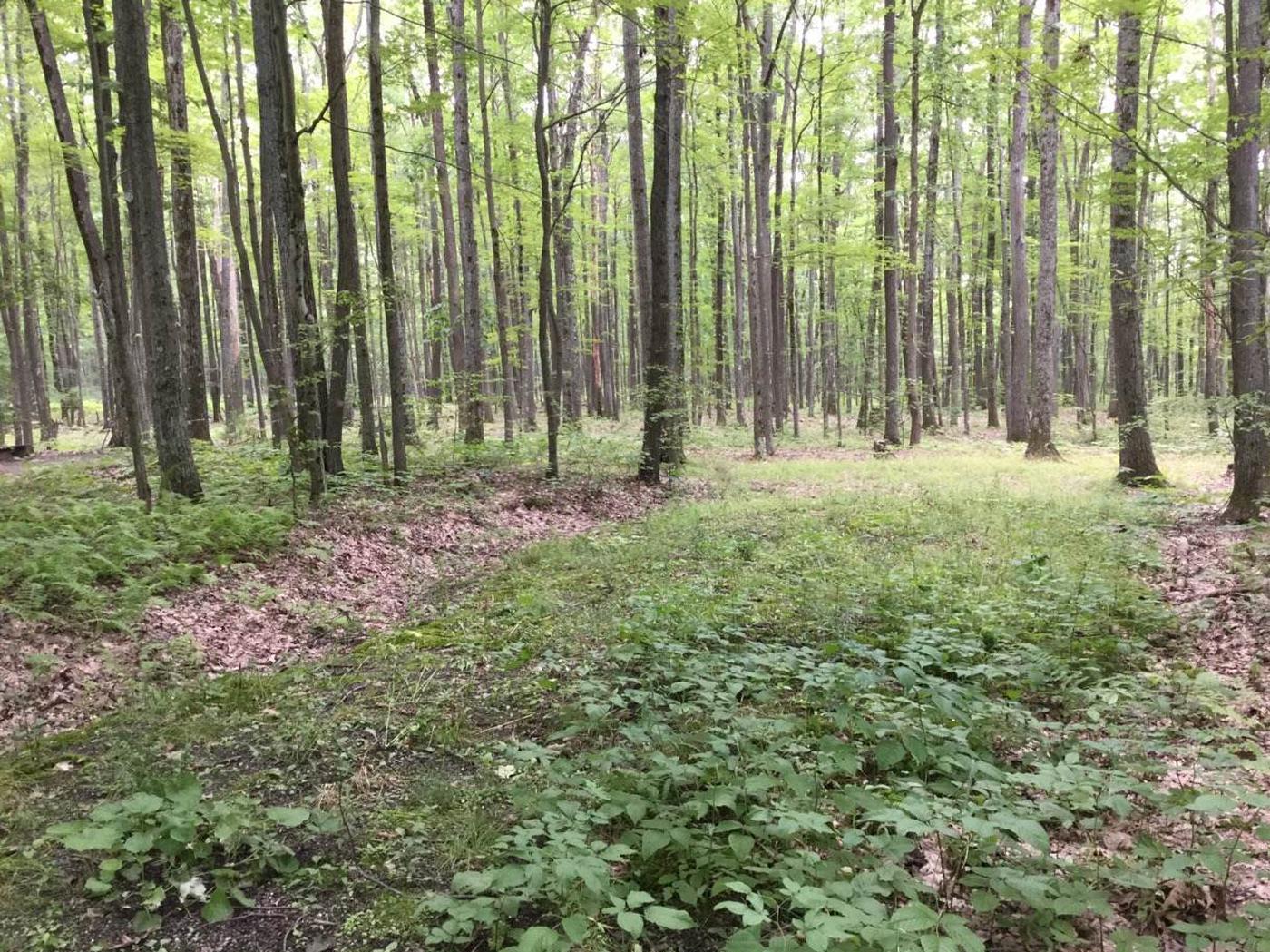 Tracy Ridge Recreation Area: Campsite 118 (not in use)