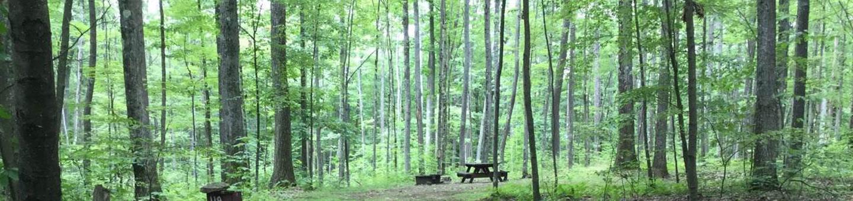 Tracy Ridge Recreation Area: Campsite 119