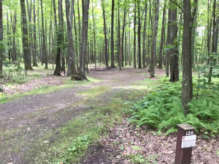 Tracy Ridge Recreation Area: Campsite 120