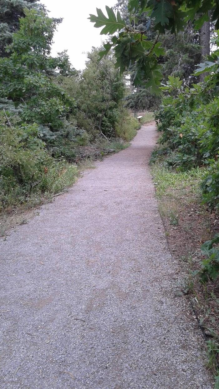 This is a picture of a trail to the lookout pointBalsam Glade Nature Trail to La Madera Canyon Overlook