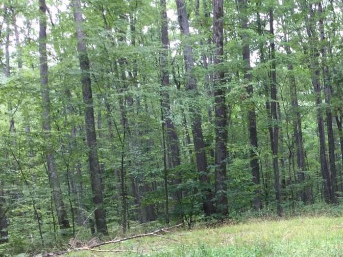 Tracy Ridge Recreation Area: Campsite 46 (not in use)