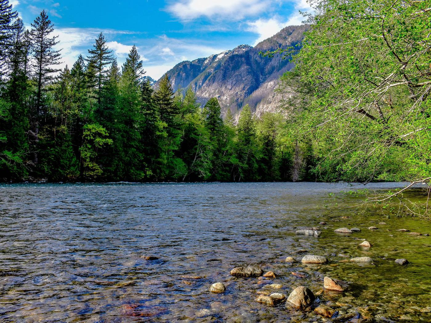 Placid river bordered by lush forests with tall mountains in the distanceView of the Skagit River from the Newhalem Campground