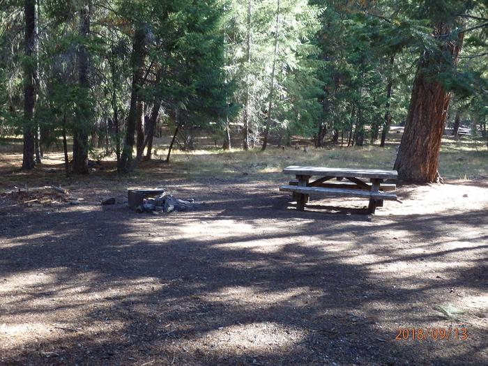 Kaner FlatNice site set in old growth pine trees