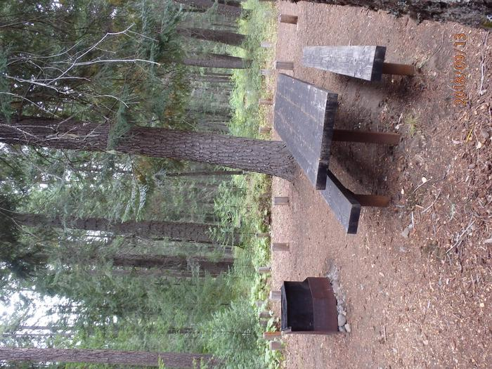 American ForksNice site with space for tents amongst the Old Growth Forest
