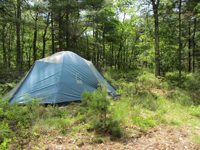 Long Island site 1 campsite