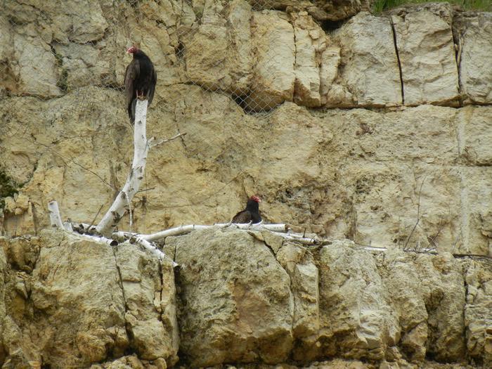 Wildlife Wildlife at Eau Galle