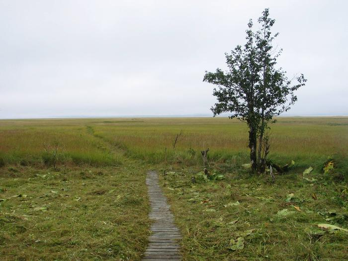 View of Stikine River grassflatsView from Koknuk Cabin