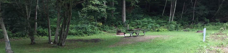 Willow Bay Recreation Area: Campsite 50