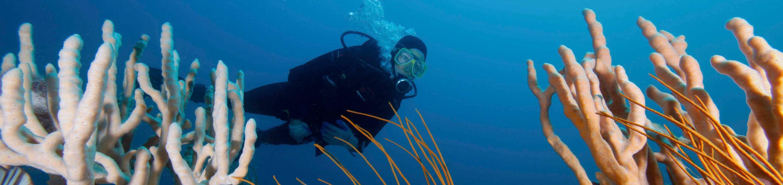 Gray's Reef National Marine SanctuaryA diver among sponges in Gray's Reef National Marine Sanctuary
