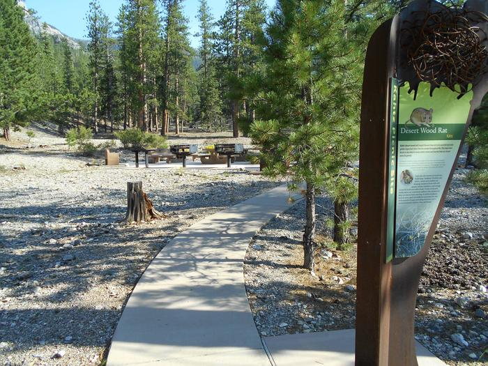 Desert Wood Rat Site