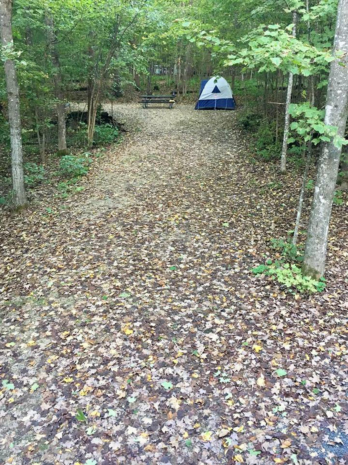 Site 25 with tent