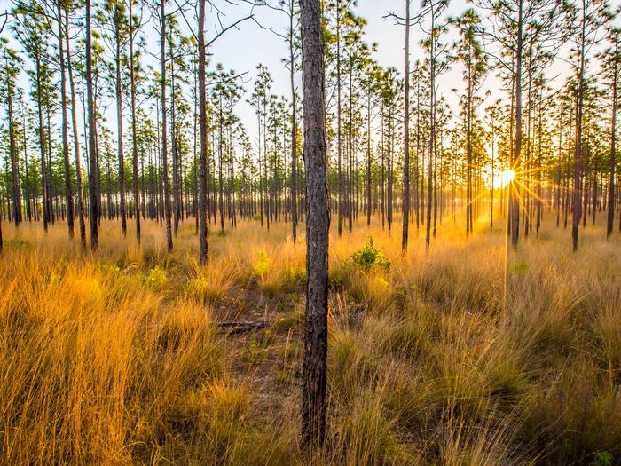 Preview photo of National Forests in Florida