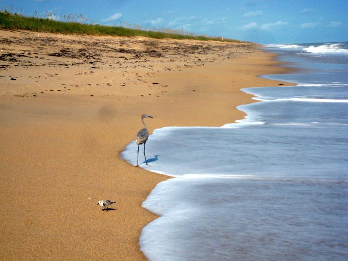 Preview photo of Canaveral National Seashore Permits
