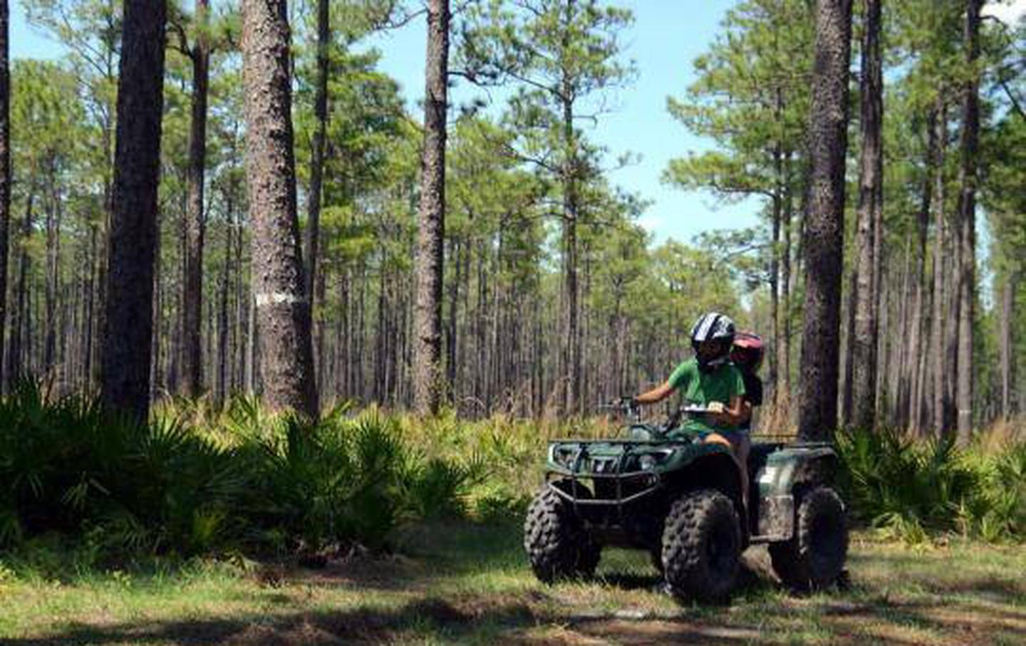 Photo: National Forests in Florida OHV Trails