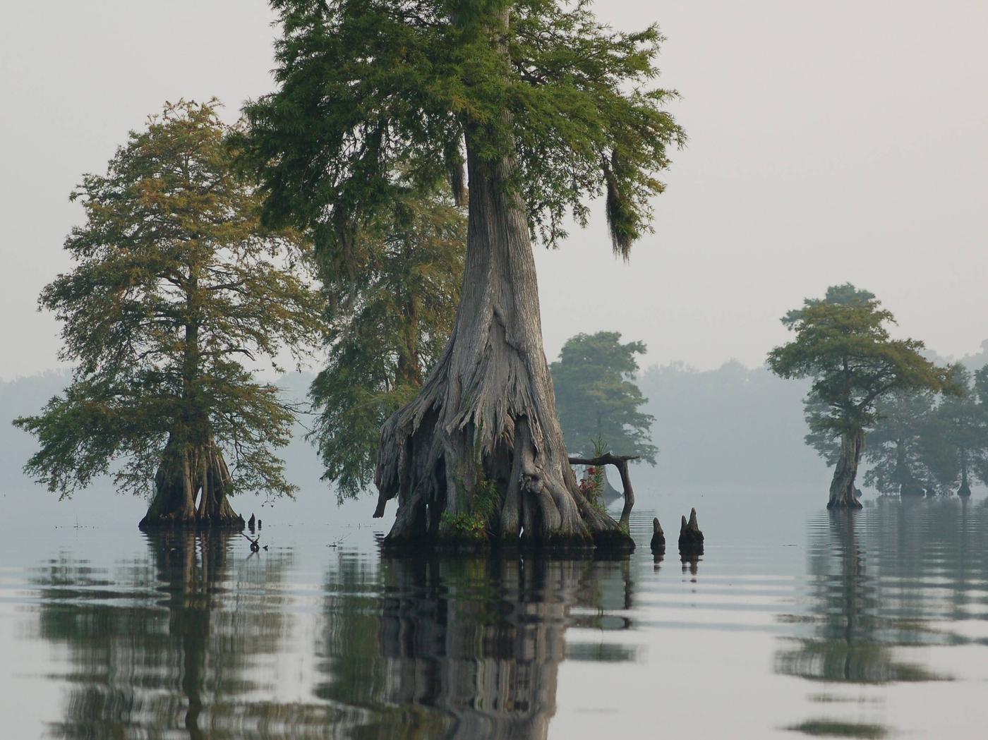 Great Dismal Swamp National Wildlife Refuge