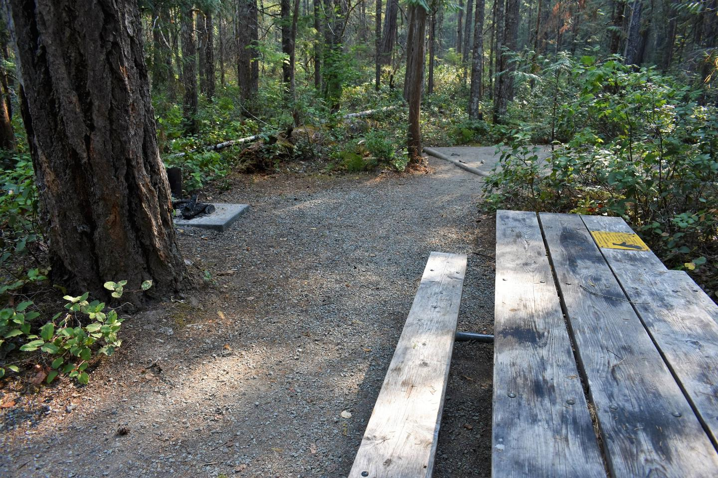 Fire ring, picnic table, and tent padView of campsite