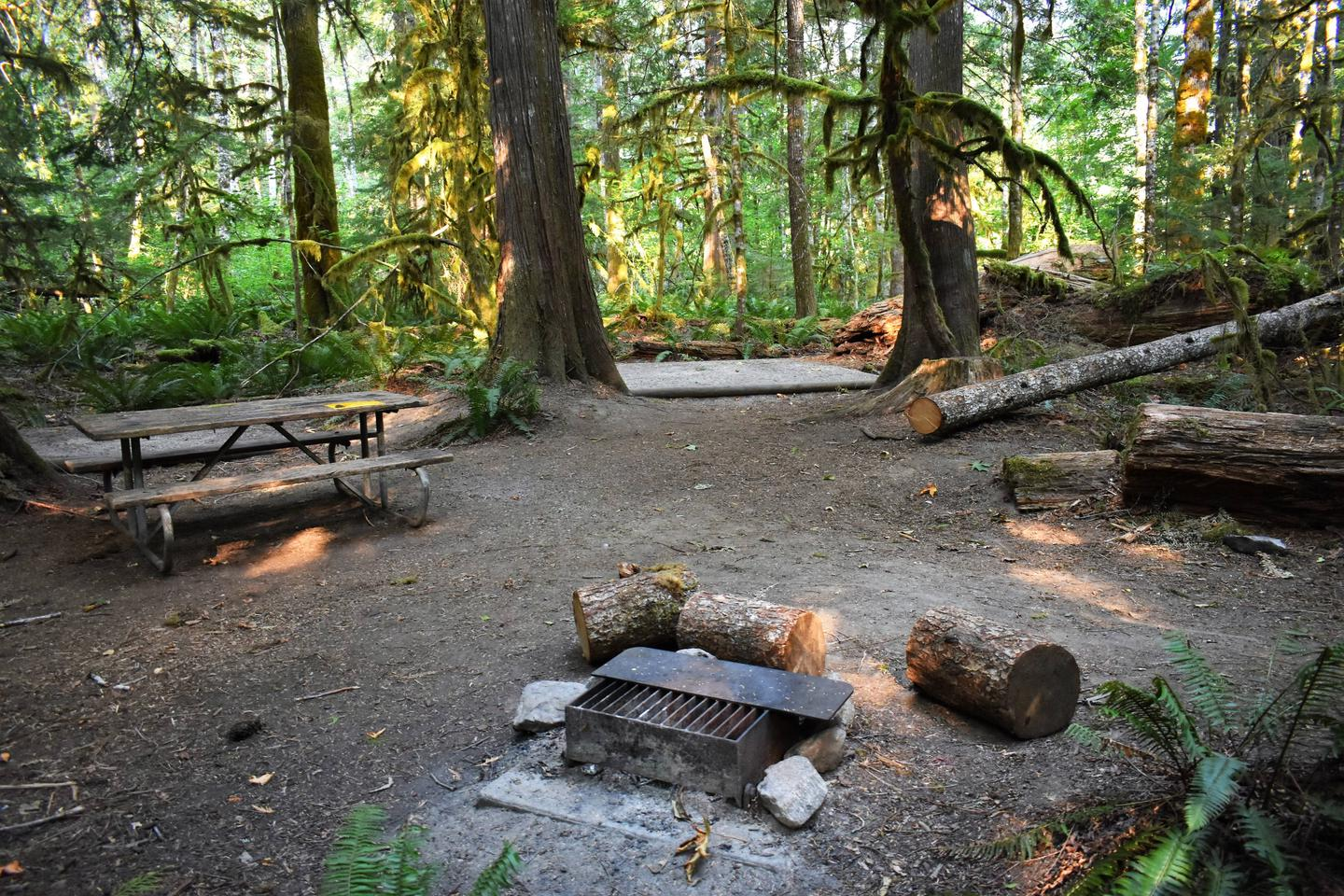 Picnic table, tent pads, and fire ringView of campsite