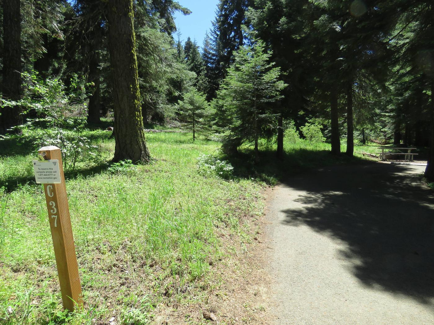 Hyatt Lake Recreation AreaHyatt Campground Campsite