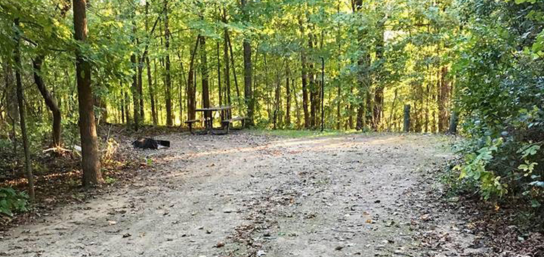Site 19 ground image