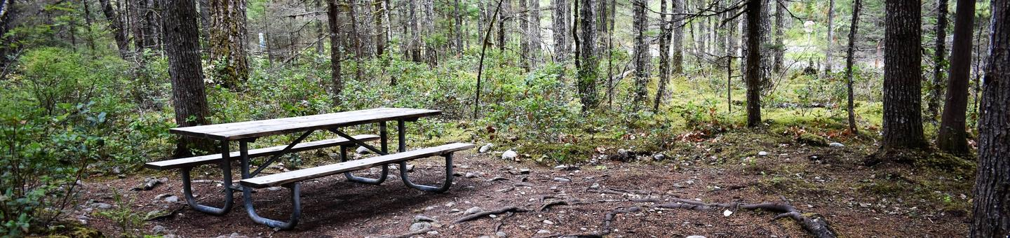Picnic table surrounded by treesView of campsite
