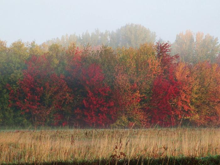 Preview photo of Missisquoi National Wildlife Refuge