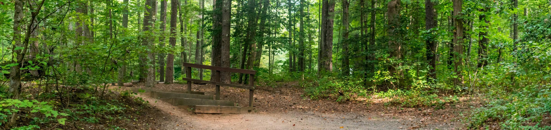 Lake Powhatan #25 CampsiteLake Powhatan Bent Creek #25