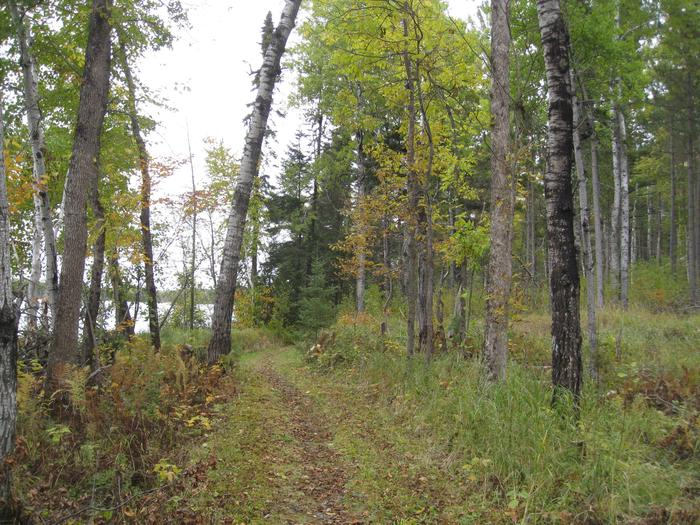 Picture of trail in the woods.Hiking trail that goes around campground area and along river.