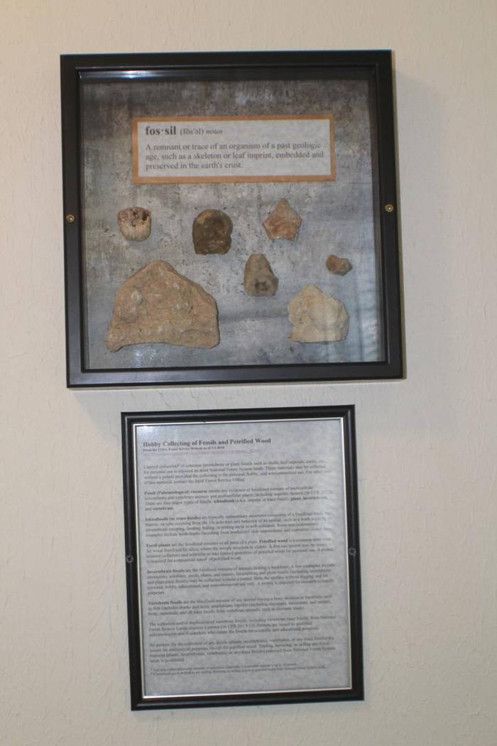 wall decorCabin 5: Archaeology Themed decor with actual fossils.