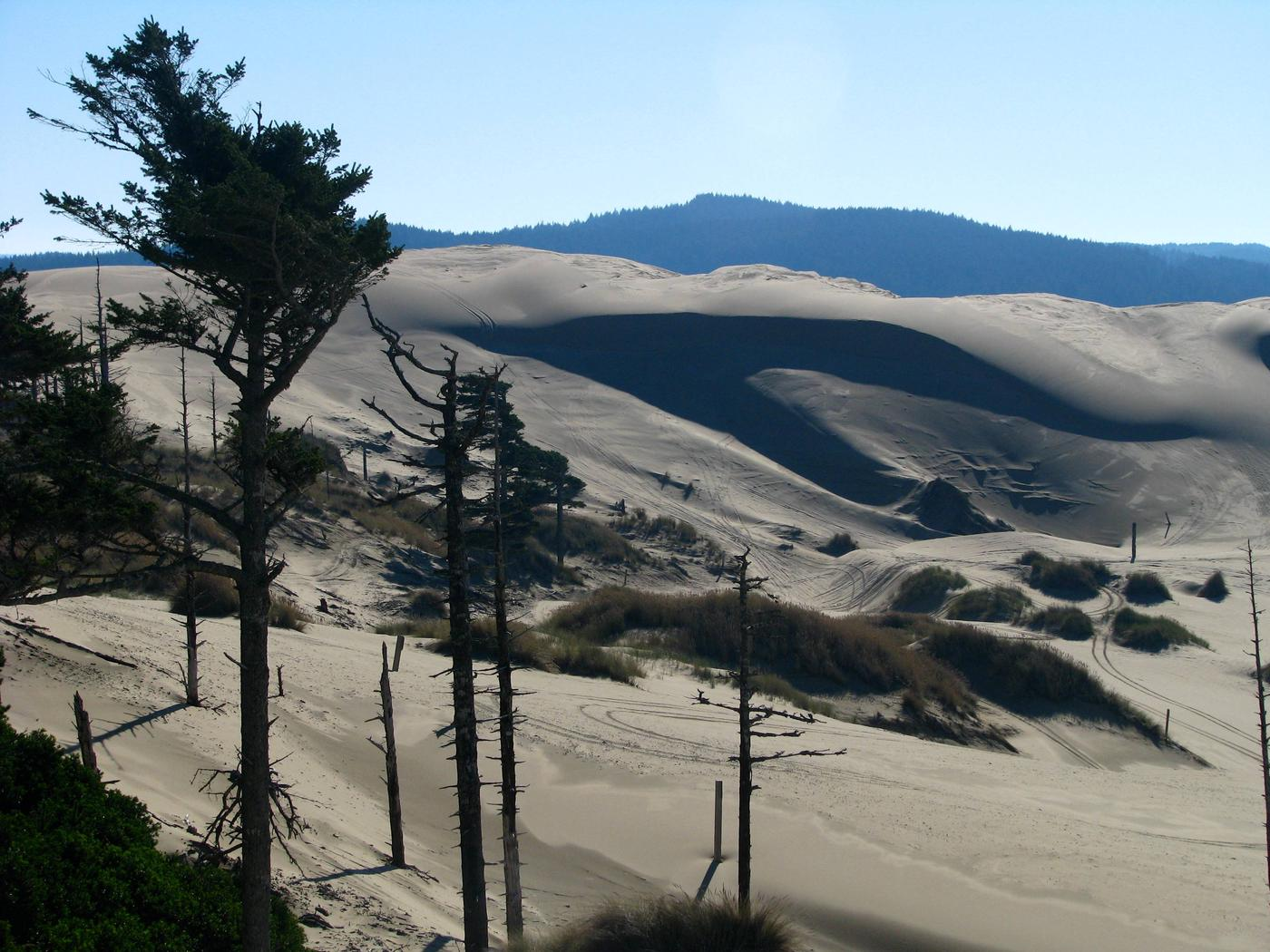 Shore pines in silhouette with large sand dune and blue hills in background.Oregon Dunes National Recreation Area