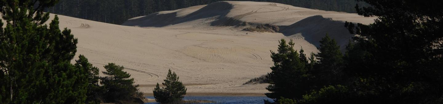 Shore pines with sand dunes and conifer covered hills in background.Spinreel Sand Camping