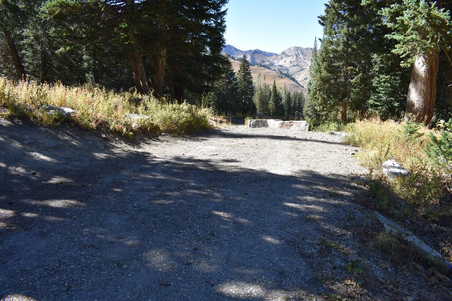Site 9Albion Basin, Little Cottonwood Canyon