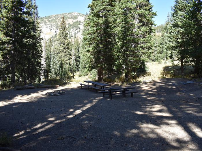 Site 11Albion Basin, Little Cottonwood Canyon