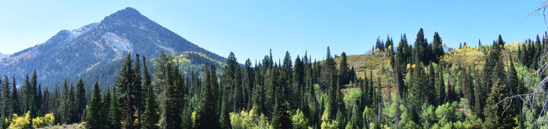 Spruces CampgroundBig Cottonwood Canyon