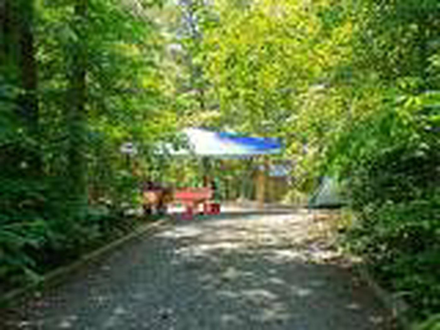 Badin Lake Campground-Site 017
