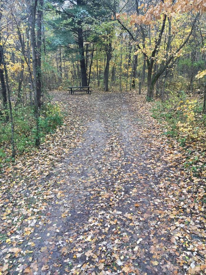 Site 8 in fall
