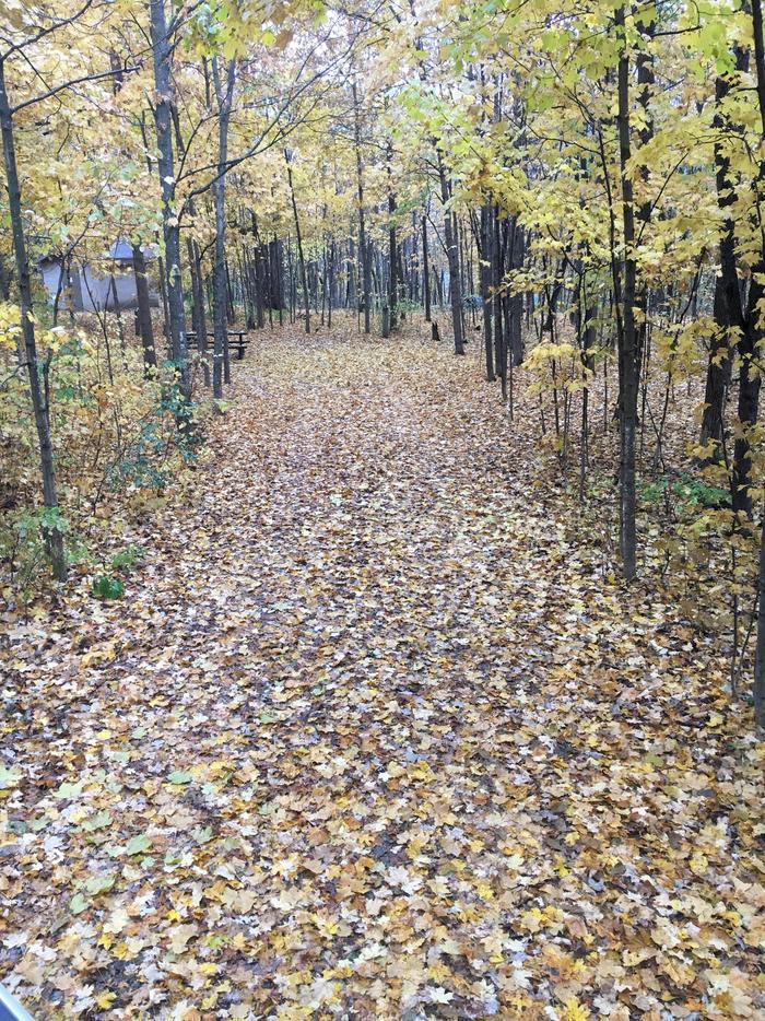Site 10 in fall