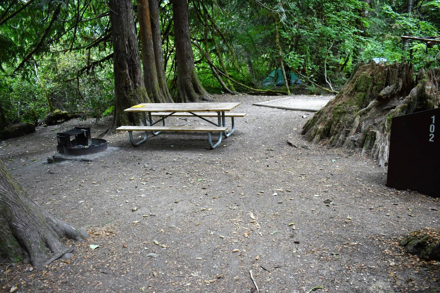 Fire ring, picnic table, tent pad, and food storage lockerView of campsite