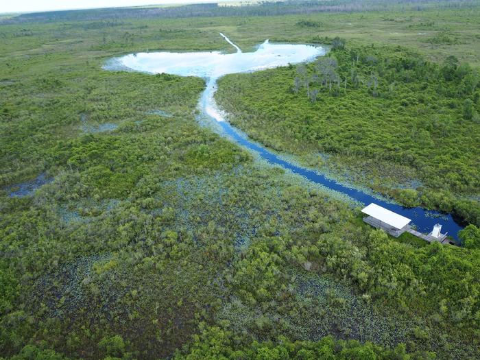 image of water trail with brown vegetation and yellow flowers on the edgesWater trail through the open water prairies of the Okefenokee
