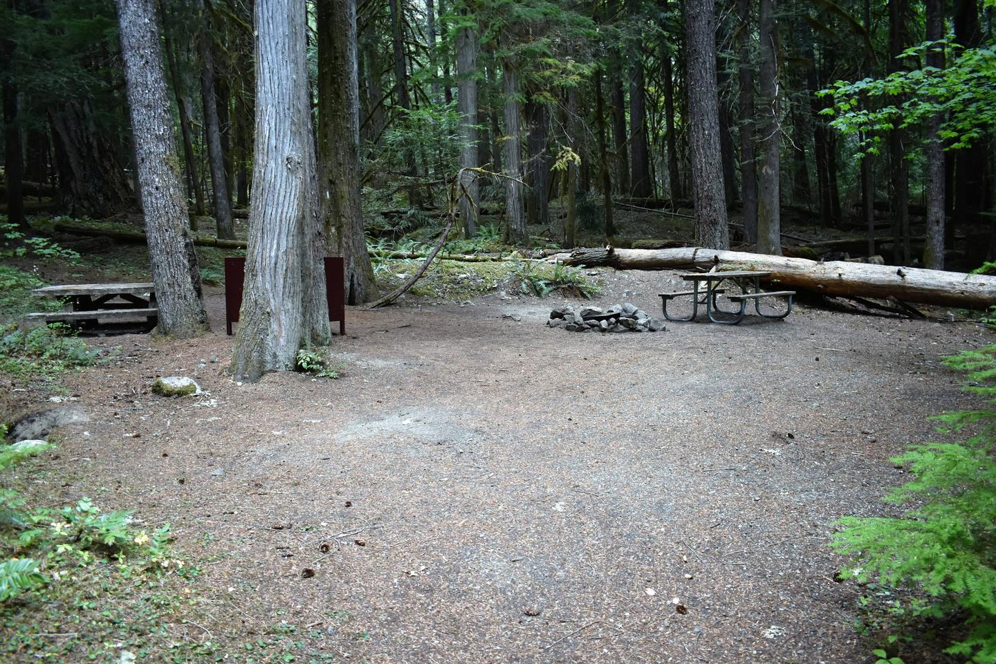 Picnic table, food storage locker, and fire ringView of campsite