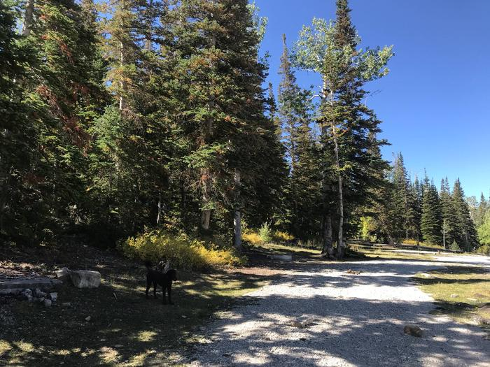 Willow Lake Campground #4