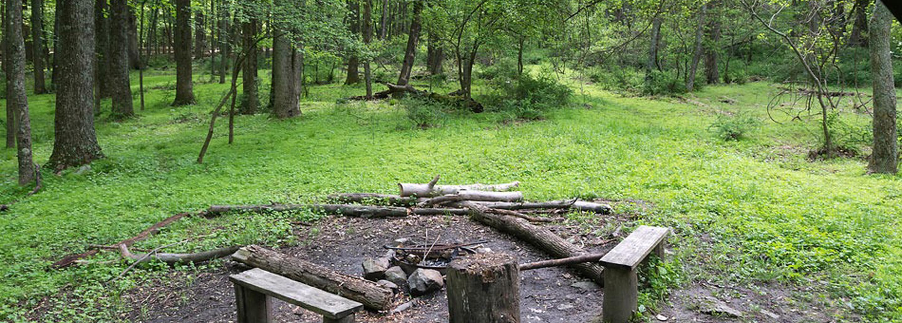 A campfire circle with wooden benches and logs around it, with tree in the backgroundAdirondack shelter view