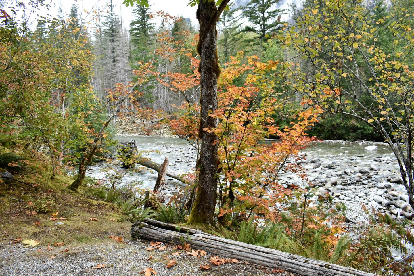 Photo of Goodell Creek from group site with trees and boulder-strewn creekView of Newhalem Creek from Group Site B