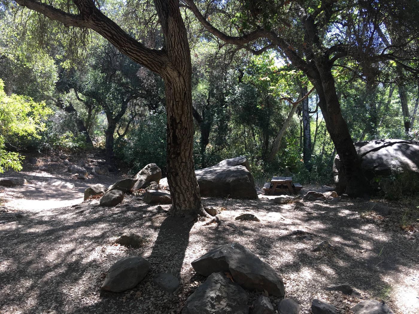 Wheeler Gorge Site 40