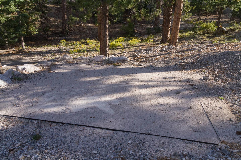 Site 31Site 31 tent pad
